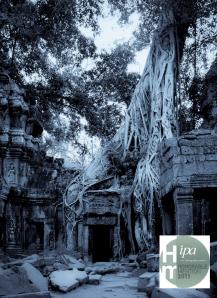 Strangler Fig; Ta Prohm Temple; Angkor Wat, Cambodia