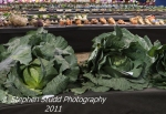 Giant Cabbages