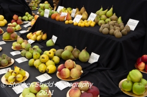 Heritage British Apple and Pear display at Malvern autumn show 2011