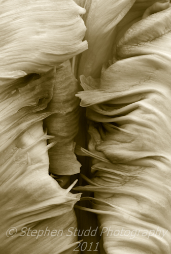 Homage to Edward Weston