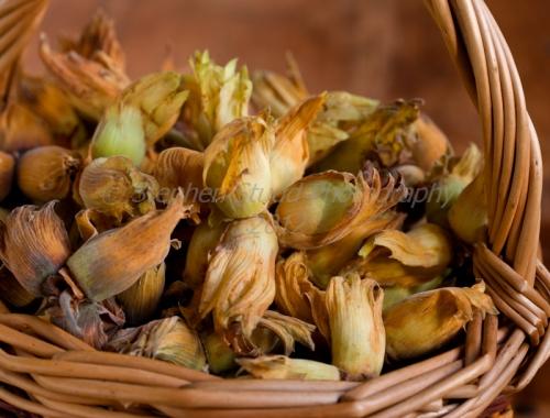 Cobnuts (hazel) in willow basket