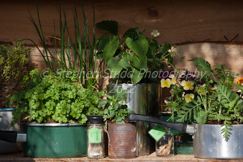 recycled reused materials being used as growing containers