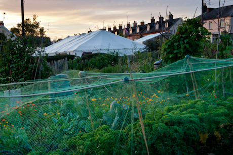 allotments overlooking Crown & Sceptre Stroud