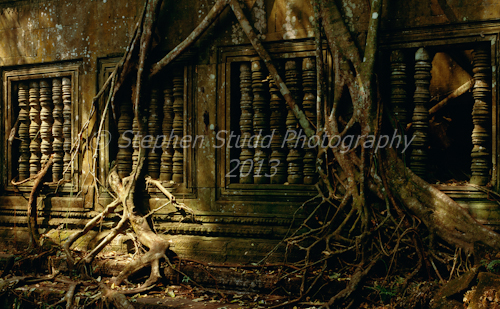 temple tree roots