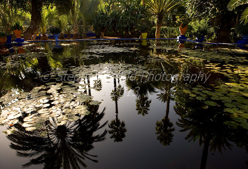 Palm trees reflected in pool, Marjorelle garden, Morocco, sunrise