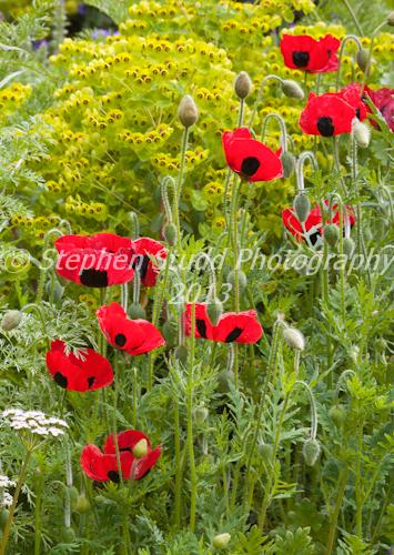Show Gardens; The Brewin Dolphin Garden   Designer Cleve West;    Sponsor; Brewin Dolphin   Awarded Gold & Best in Show RHS Chelsea Flower Show 2012
