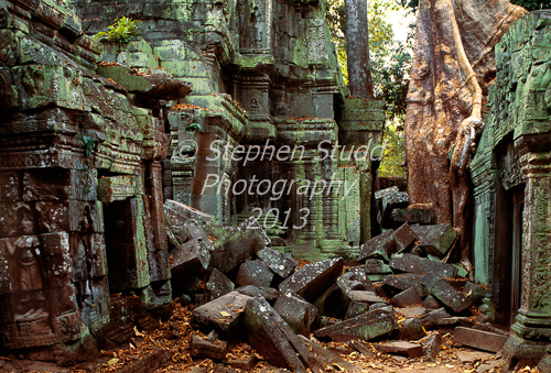 Roots of tree in back of temple