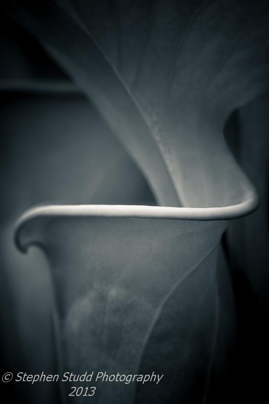 Sarracenia Flava all green form pitcher plant IGPOTY monochrome photography by Stephen Studd