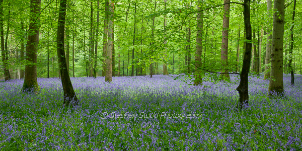 Bluebells photography workshop 2014 Digital photography holidays holiday tour tours hosted by Stephen Studd