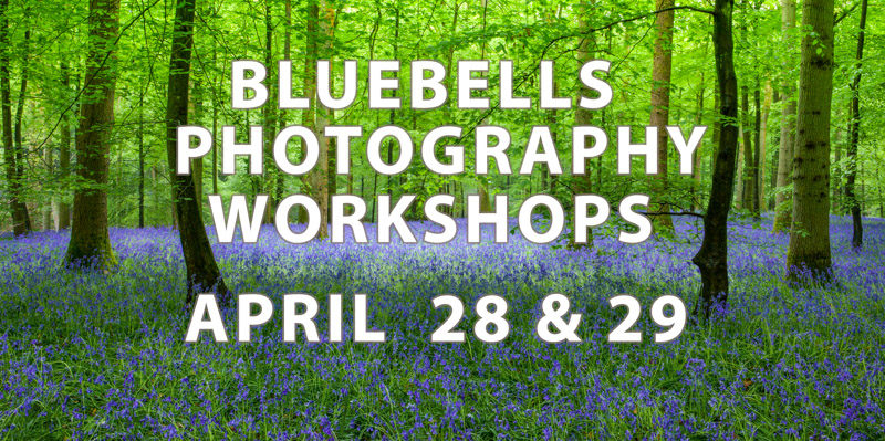 Bluebells flower photography workshops and courses in April forest of dean gloucestershire England UK  hosted by Stephen Studd