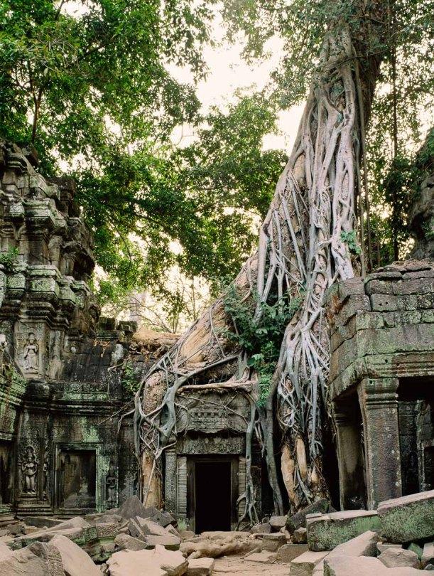 Angkor Wat Cambodia Ta Prohm Temple