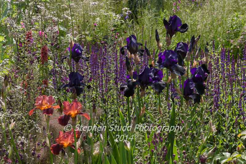 RHS Chelsea flower show 2014 Cloudy Bay Sensory Garden - Designer Andrew Wilson & Gavin McWilliam - Sponsor: Cloudy Bay
