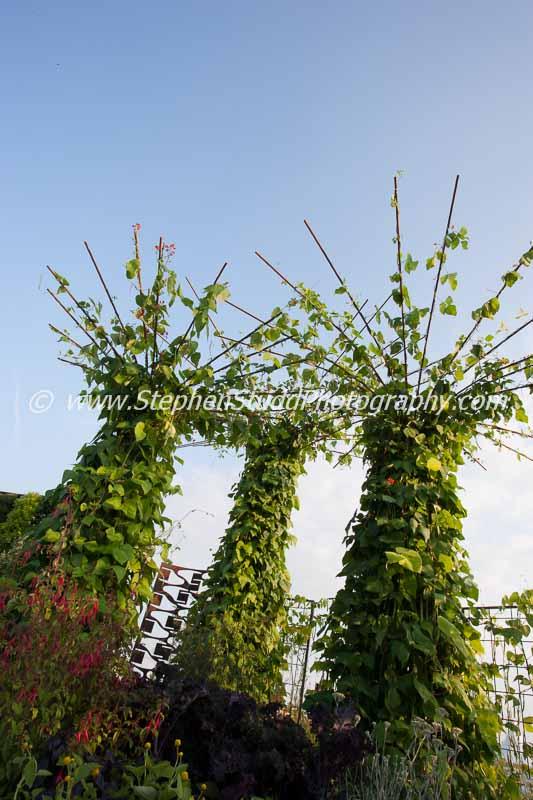 Tatton Park 2014 Cheshire RHS flower show Reaseheath college A taste of Wythenshawe garden