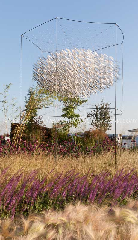 Tatton Park 2014 Cheshire RHS flower show 'See the Wind' garden designed by Joan Mulvenna and Andrew Lee with it's purple pink hues of the Hordeum Jubatum (ornamental barley) against the Salvia Nemorosa 'Amethyst'.