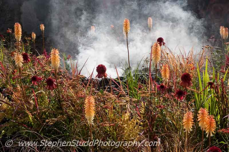 RHS Hampton Court flower show 2014 Stephen Studd photography -