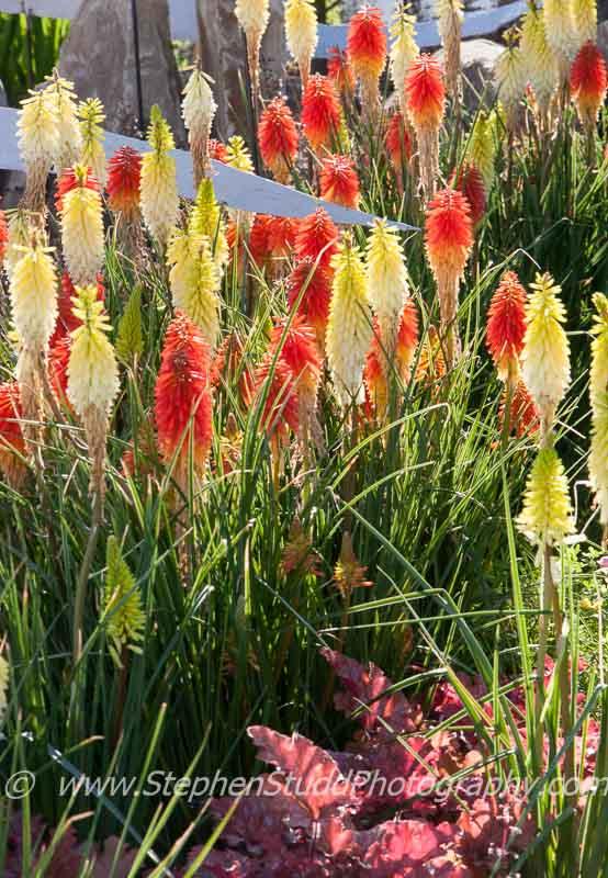 RHS Tatton park flower show 2014 Element Garden designed by Michael Vinsun