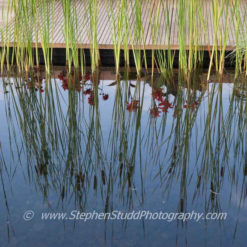 July 2014 stephen studd photography for Pip probert garden designer