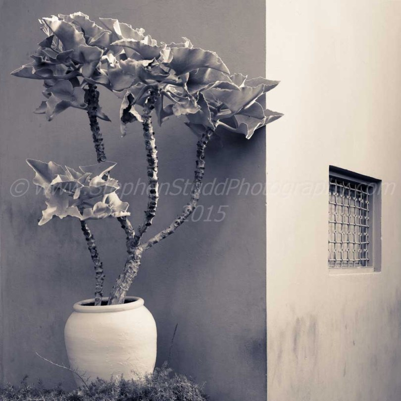 marrakech Morocco Jardin majorelle digital photography holidays tours and workshops