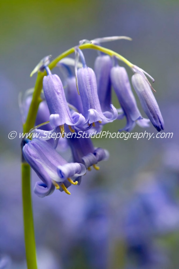 Bluebells flower photography workshop digital photography holidays tours workshops holidays vacations