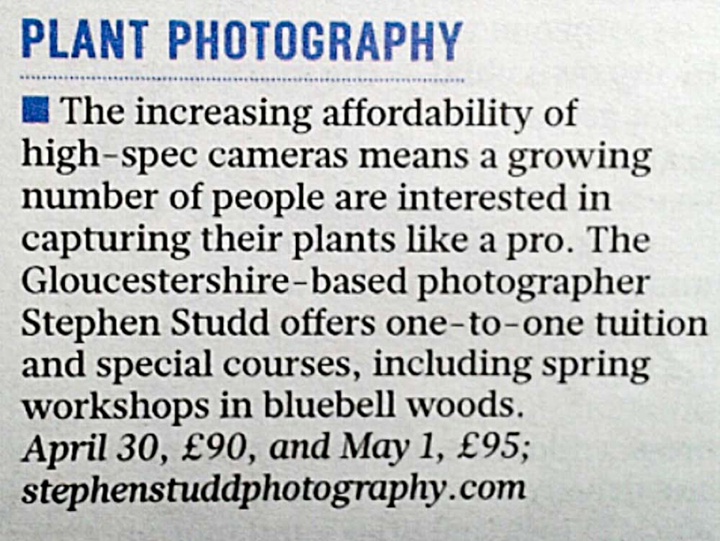 Bluebell woods flower photography workshopsin Gloucestershire UK England garlic woods Stroud hosted by Stephen Studd photography