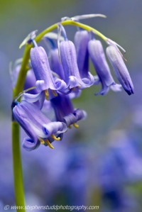 Bluebells flower photography workshop and courses in the UK England, Forest of Dean Gloucestershire digital photography holidays tours workshops holidays vacations
