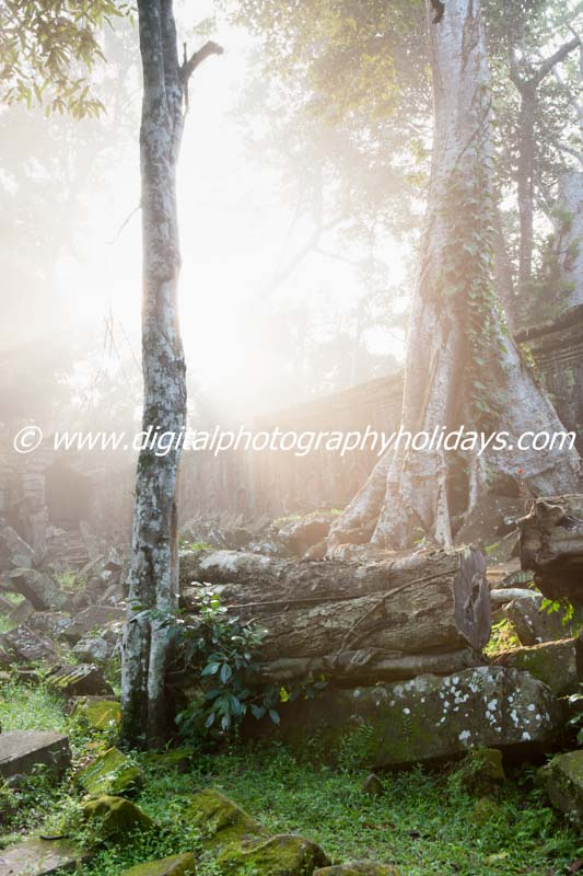 digital photography holidays holiday tour tours workshop workshops to Myanmar Burma Cambodia Angkor Wat Marrakech Venice 2014 2015 South East Asia Cambodia Siem Reap Angkor Wat temple complex UNESCO World Heritage site Angkor Thom Ta Prohm temple tree gro