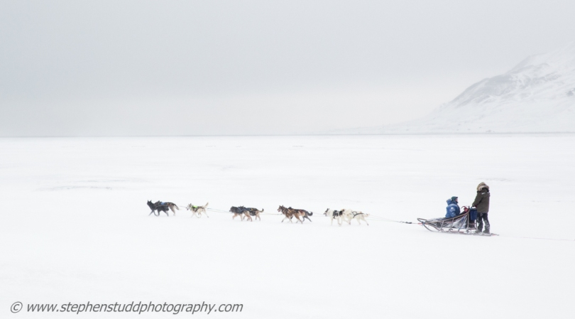 Arctic circle, North polar region, Europe, Scandinavia, Norway, Svalbard, Spitsbergen, Longyearbyen, husky dog sled, dusk