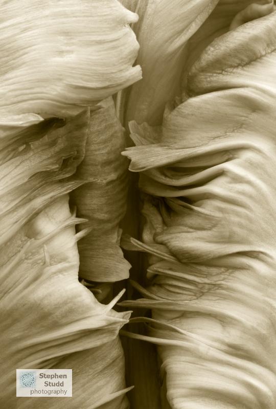 Homage to Edward Weston Stephen Studd IGPOTY