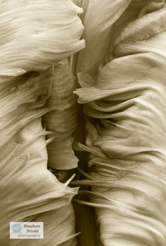 Homage to Edward Weston Stephen Studd IGPOTY