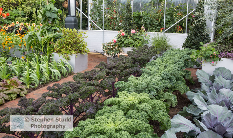 Photographer:Stephen Studd - The BBC Radio 2 Chris Evans Taste Garden garden, from right to left: Cabbage 'Red Jewel, Kale 'Reflex' Kale 'Redbor', lettuce 'Red Iceberg', Leek 'Cumbria', with nasturtium 'Tall mixed', sweetcorn 'Sundance', runner bean 'St