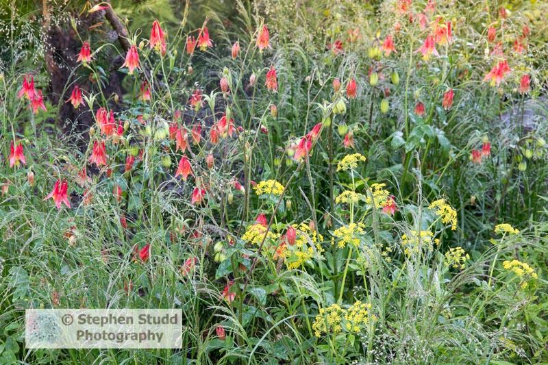 Photographer: Stephen Studd, The Royal Bank of Canada Garden,  D