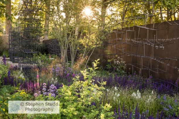 Photographer: Stephen Studd - The Breaking Ground Garden, Sunrise over the garden, Stipa gigantica, Melica altissima 'Alba', Salvia nemorosa 'Caradonna', Salvia greggii 'Nachtvlinder', Verbascum phoeniculum 'Violetta', Pimpinella major 'Rosea', Designer: