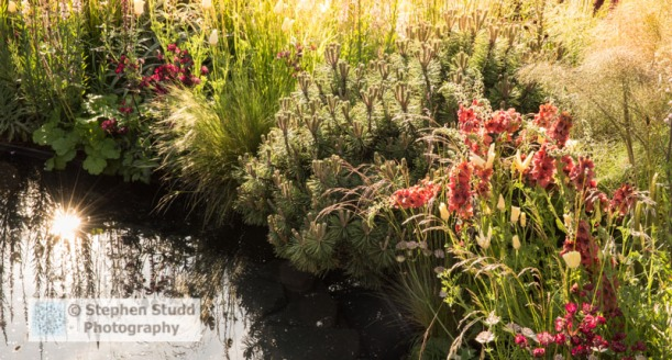 Photographer: Stephen Studd  -  The BBC Radio 2 Jeremy Vine Texture Garden, sun reflected in small pond, Verbascum 'Firedance', Pinus mugo, Stipa tenuissima, Calamagrostis x acutiflora 'Karl Foerster', Calamagrostis brachytricha, Melica altissima 'Alba'