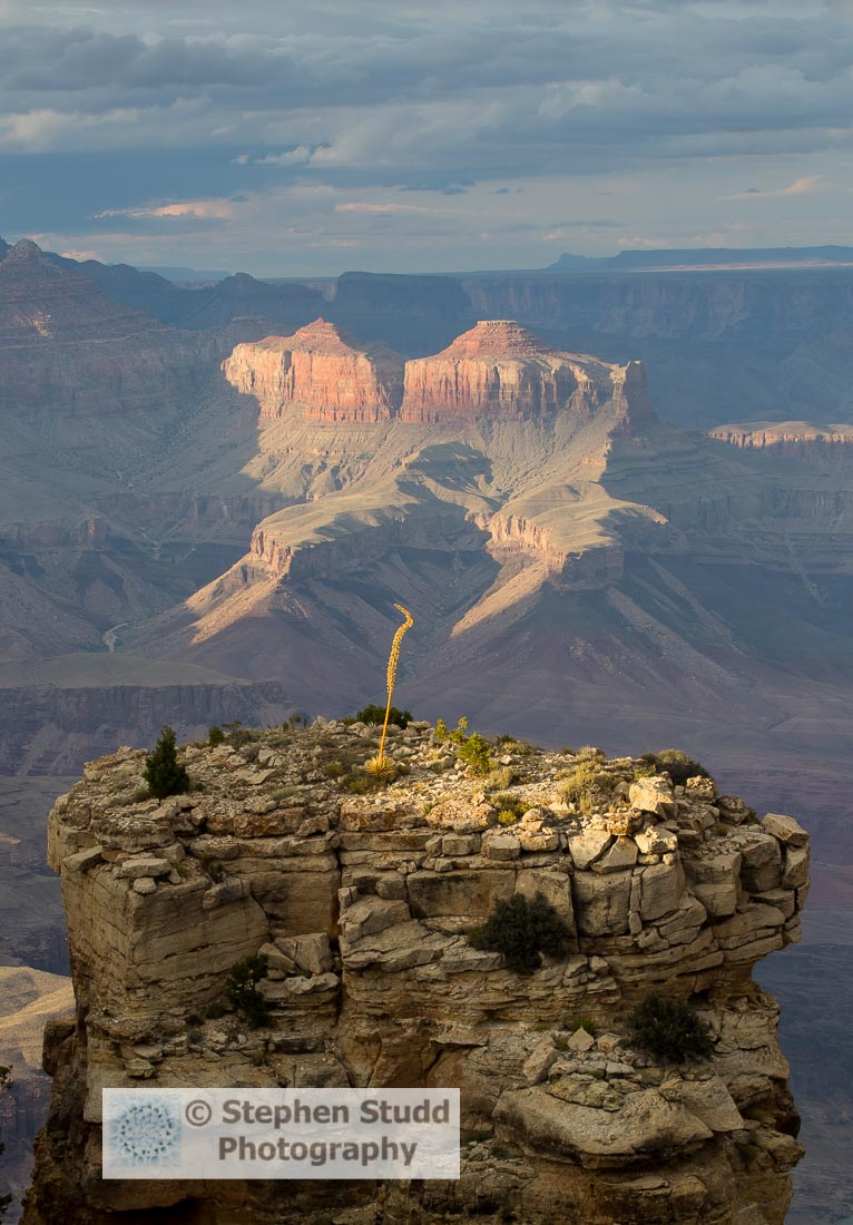 Grand Canyon National Park USA IGPOTY Stephen Studd Wildflower landscapes
