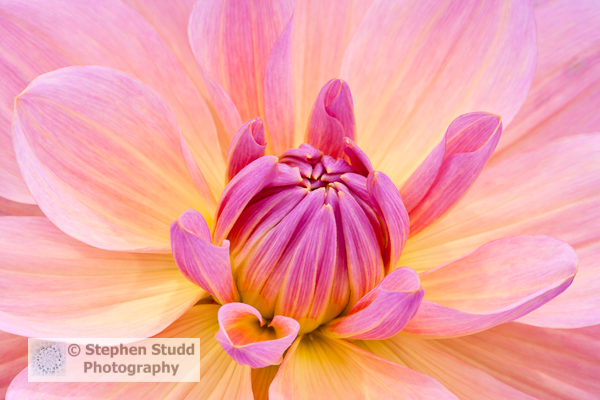 plant and Flower photography workshops courses with Stephen Studd of Digital Photography holidays