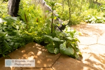 Photographer: Stephen Studd - The M & G Garden, view of green ga