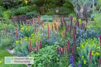 Photographer: Stephen Studd - The Resilience Garden - Border pla