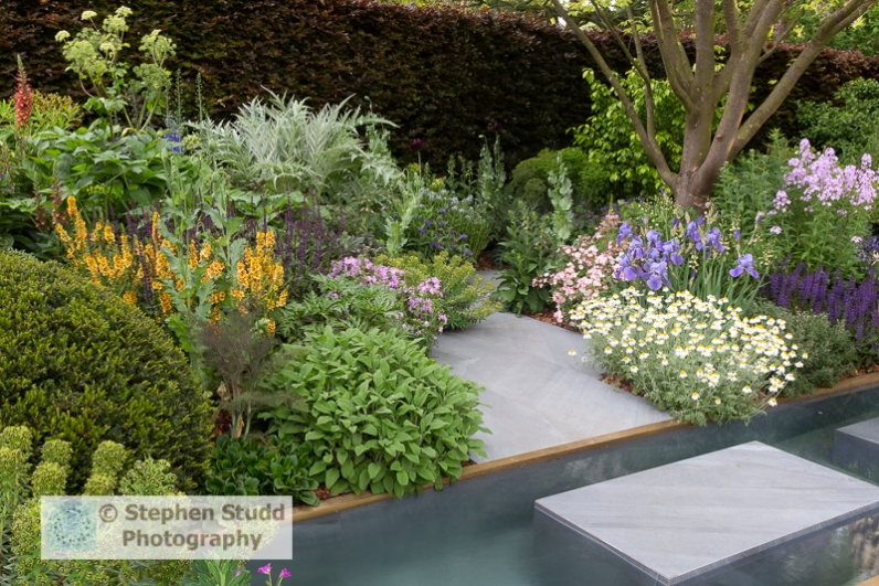 Photographer: Stephen Studd - The Morgan Stanley Garden . A Sustainable garden based around herbaceous planting supported by a water feature and structure created by the large Taxus mounds and curving Pinus nigra austriaca - Designer: Chris Beardshaw - Sponsor: Morgan Stanley - RHS Chelsea Flower Show 2019