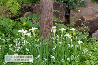 Photographer: Stephen Studd - The Resilience Garden - Iris siber