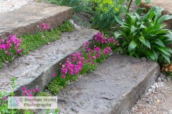 Photographer: Stephen Studd - The Resilience Garden - Armeria ma