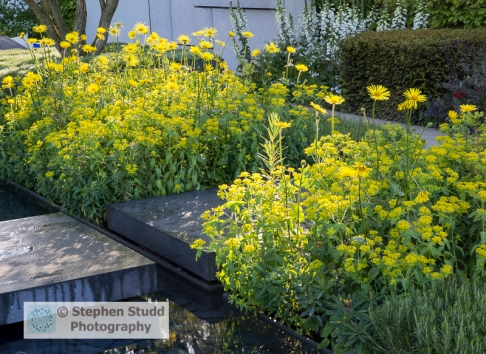 Stephen Studd - The Telegraph Garden – planting of Doronicum x excelsum 'Harpur Crewe' and Euphorbia polychroma, Papaver - water rill and concrete stepping stone Designer - Marcus Barnett - Sponsors The Telegraph - Awarded Gold medal