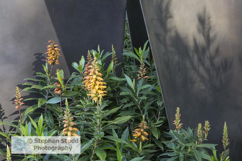 Photographer: Stephen Studd - The Telegraph Garden, bronze coated fin panel screens, Isoplexis canariensis - Designer: Andy Sturgeon - Sponsor: The Telegraph