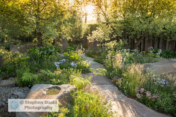 Photographer: Stephen Studd  -  The M&G Garden, view of Forest of Dean stone path and patio, oak garden wall, Aquilegia chrysantha, Briza media 'Golden Bee', Euphorbia wallichii, Phlox divaricata 'Clouds of Perfume', Quercus pubescens - Designer: Cleve We