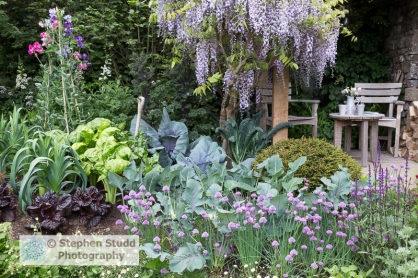 Photographer: Stephen Studd - Welcome to Yorkshire garden, view of small vegetable garden planted with red cabbage, red kale, leeks, red lettuce, kale nero di toscano, chives, small patio area with wooden tables and chairs with Wisteria and sweet peas - Designer: Mark Gregory - Sponsor: Welcome to Yorkshire