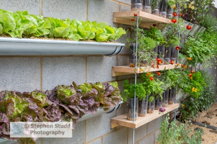 Photographer: Stephen Studd - The Lemon Tree Trust garden, vertical vegetable and herb garden, lettuce growing in old guttering, herbs grown in unusual containers, old plastic bottles and tin cans, parsley, mint, strawberries, thyme - Designer: Tom Massey - Sponsor: Lemon Tree Trust